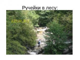 Ручейки в лесу: