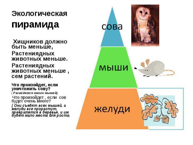 Экологическая пирамида Хищников должно быть меньше, Растениядных животных меньше.Растениядных животных меньше , сем растений.Что произойдет, если уничтожить сову?( Разведется много мышей) Что произойдет , если сов будет очень много?( Они съедят всех…