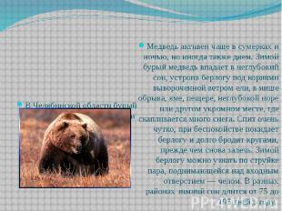 Медведь активен чаще в сумерках и ночью, но иногда также днем. Зимой бурый медве