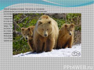 Бурый медведь всеяден. Питается, в основном, различными растительными кормами, л