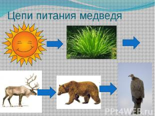 Цепи питания медведя