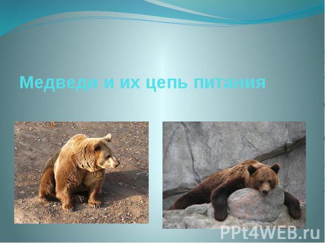 Медведи и их цепь питания
