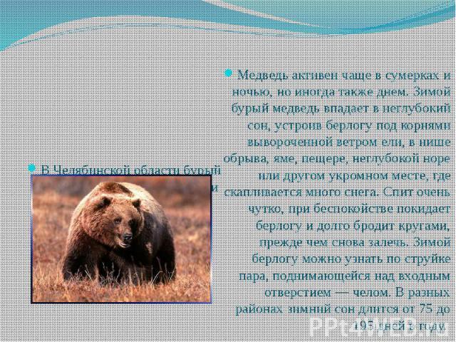 Медведь активен чаще в сумерках и ночью, но иногда также днем. Зимой бурый медведь впадает в неглубокий сон, устроив берлогу под корнями вывороченной ветром ели, в нише обрыва, яме, пещере, неглубокой норе или другом укромном месте, где скапливается…