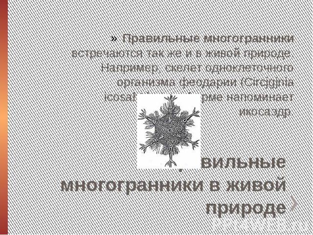 Правильные многогранники в живой природеПравильные многогранники встречаются так же и в живой природе. Например, скелет одноклеточного организма феодарии (Circjgjnia icosahtdra) по форме напоминает икосаэдр.