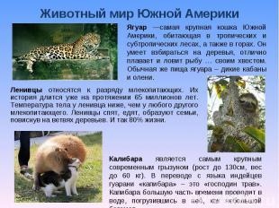 Животный мир Южной Америки Ягуар —самая крупная кошка Южной Америки, обитающая в