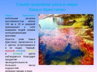 Самая красивая река в мире Каньо Кристалес Каньо Кристалес небольшая речушка про