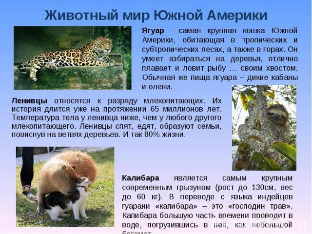 Животный мир Южной Америки Ягуар —самая крупная кошка Южной Америки, обитающая в тропических и субтропических лесах, а также в горах. Он умеет взбираться на деревья, отлично плавает и ловит рыбу … своим хвостом. Обычная же пища ягуара – дикие кабаны…
