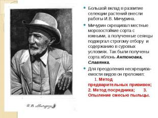 Большой вклад в развитие селекции растений внесли работы И.В. Мичурина.Мичурин с
