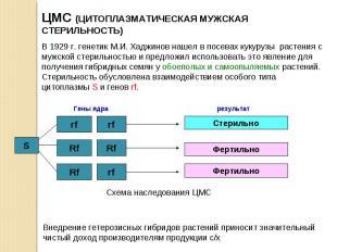 ЦМС (ЦИТОПЛАЗМАТИЧЕСКАЯ МУЖСКАЯ СТЕРИЛЬНОСТЬ)В 1929 г. генетик М.И. Хаджинов наш