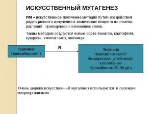 ИМ – искусственное получение мутаций путем воздействия радиационного излучения и