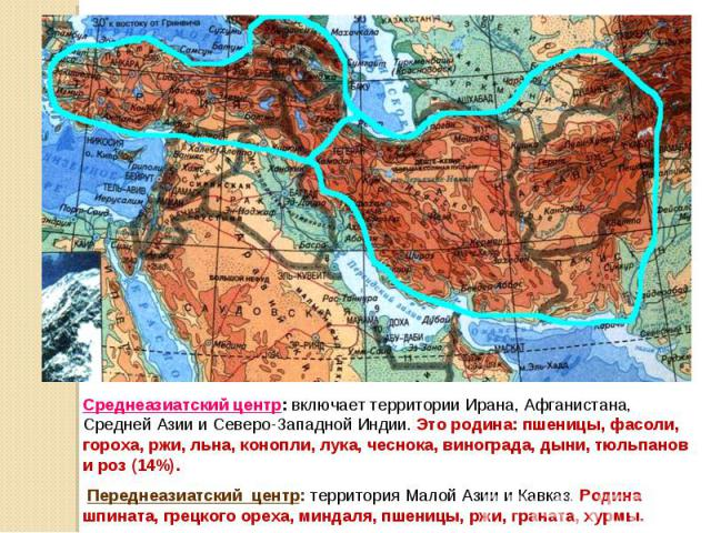 Среднеазиатский центр: включает территории Ирана, Афганистана, Средней Азии и Северо-Западной Индии. Это родина: пшеницы, фасоли, гороха, ржи, льна, конопли, лука, чеснока, винограда, дыни, тюльпанов и роз (14%). Переднеазиатский центр: территория М…