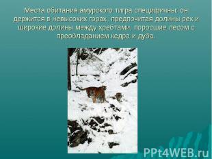 Места обитания амурского тигра специфичны: он держится в невысоких горах, предпо