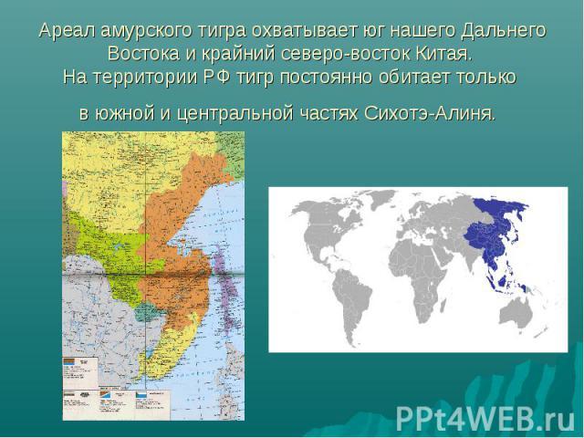 Ареал амурского тигра охватывает юг нашего Дальнего Востока и крайний северо-восток Китая. На территории РФ тигр постоянно обитает только в южной и центральной частях Сихотэ-Алиня.