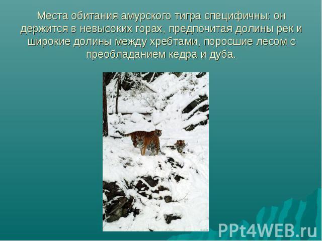 Места обитания амурского тигра специфичны: он держится в невысоких горах, предпочитая долины рек и широкие долины между хребтами, поросшие лесом с преобладанием кедра и дуба.