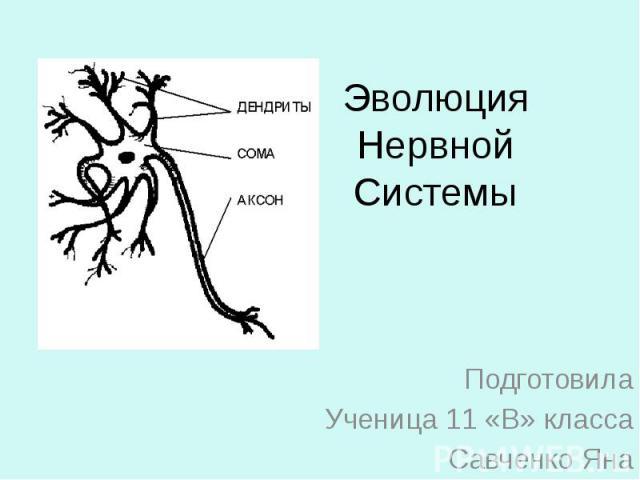 Эволюция Нервной Системы Подготовила Ученица 11 «В» класса Савченко Яна