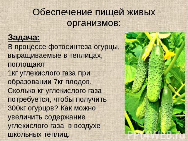 Обеспечение пищей живых организмов: Задача: В процессе фотосинтеза огурцы, выращиваемые в теплицах, поглощают 1кг углекислого газа при образовании 7кг плодов. Сколько кг углекислого газа потребуется, чтобы получить 300кг огурцов? Как можно увеличить…