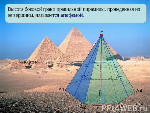 Высота боковой грани правильной пирамиды, проведенная из ее вершины, называется апофемой.