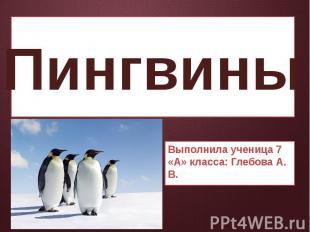 Пингвины Выполнила ученица 7 «А» класса: Глебова А. В.