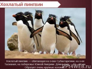 Хохлатый пингвин Хохлатый пингвин — обитающая на о-вах Субантарктики, на о-ве Та
