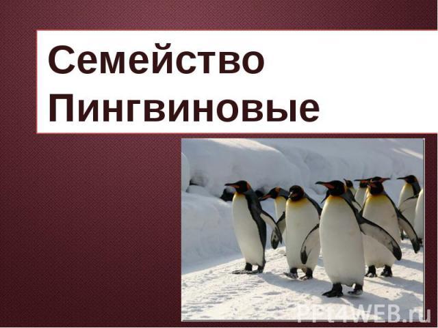 Семейство Пингвиновые