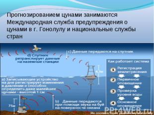 Прогнозированием цунами занимаются Международная служба предупреждения о цунами