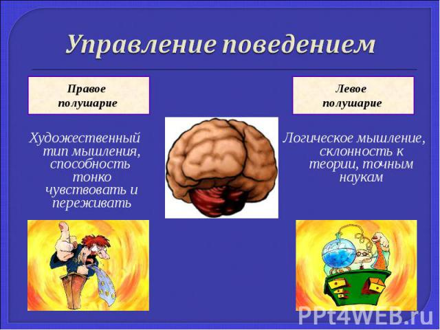 Управление поведениемХудожественный тип мышления, способность тонко чувствовать и переживатьЛогическое мышление, склонность к теории, точным наукам