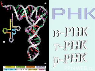 и-РНКт-РНКр-РНК