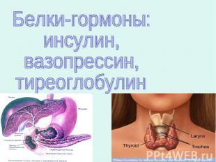 Белки-гормоны:инсулин,вазопрессин,тиреоглобулин