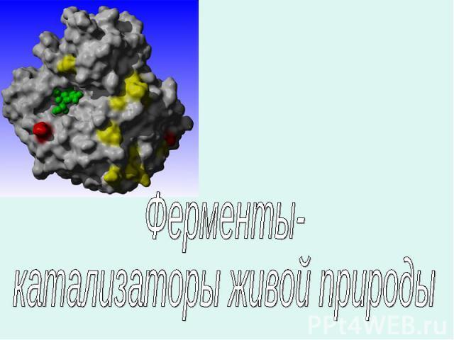 Ферменты-катализаторы живой природы