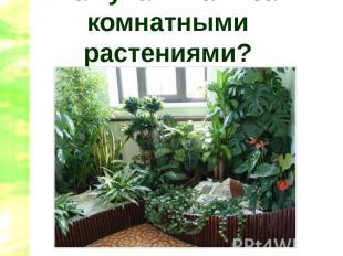Как ухаживать за комнатными растениями?
