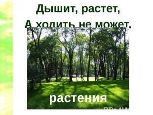 Дышит, растет,А ходить не может.