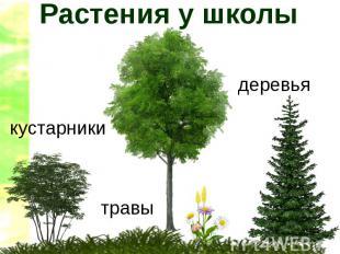 Растения у школы