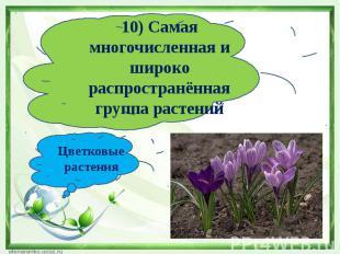 10) Самая многочисленная и широко распространённая группа растенийЦветковые раст