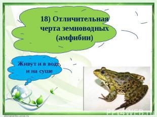 18) Отличительная черта земноводных (амфибии)Живут и в воде, и на суше
