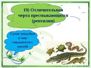 19) Отличительная черта пресмыкающихся (рептилии)Сухие чешуйки и они смыкаются с