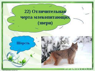 22) Отличительная черта млекопитающих (звери)Шерсть
