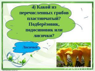 4) Какой из перечисленных грибов пластинчатый?Подберёзовик, подосиновик или лиси