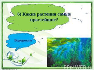 6) Какие растения самые простейшие?Водоросли