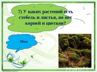 7) У каких растений есть стебель и листья, но нет корней и цветков?Мхи