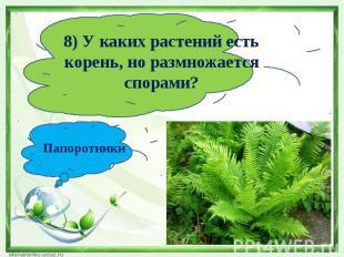 8) У каких растений есть корень, но размножается спорами?Папоротники