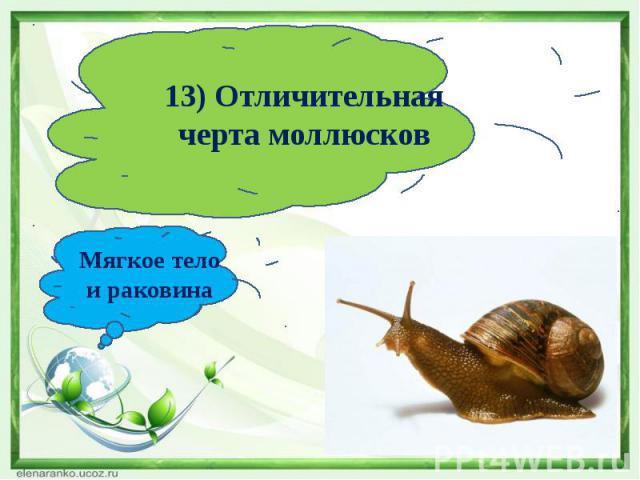 13) Отличительная черта моллюсковМягкое тело и раковина