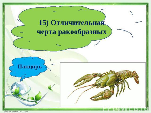 15) Отличительная черта ракообразныхПанцирь