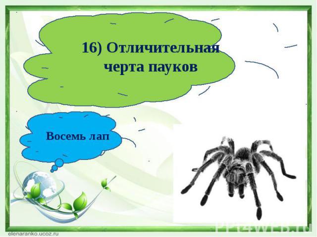 16) Отличительная черта пауковВосемь лап