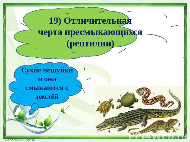 19) Отличительная черта пресмыкающихся (рептилии)Сухие чешуйки и они смыкаются с землёй
