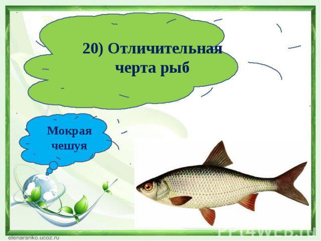 20) Отличительная черта рыбМокрая чешуя