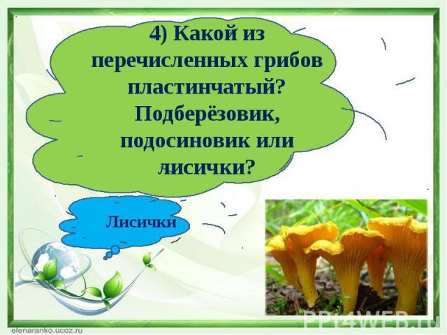 4) Какой из перечисленных грибов пластинчатый?Подберёзовик, подосиновик или лисички?Лисички
