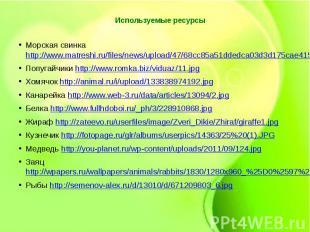 Используемые ресурсыМорская свинка http://www.matreshi.ru/files/news/upload/47/6