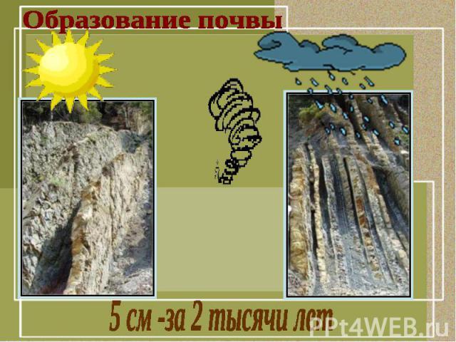 Образование почвы5 см -за 2 тысячи лет