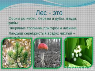 Лес - это Сосны до небес, березы и дубы, ягоды, грибы… Звериные тропинки,пригорк