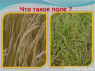 Что такое поле ?